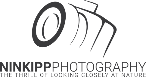 Ninkipp Photography